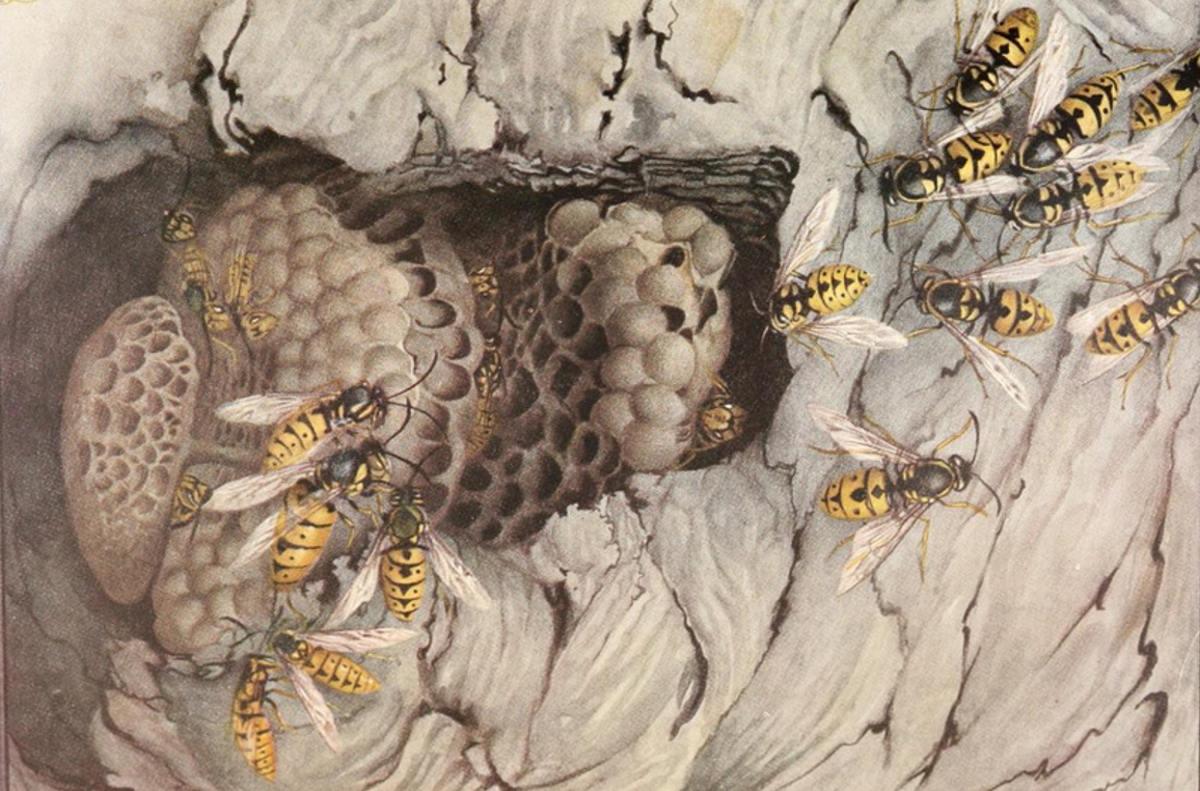 Insekten in der Krimiblog-Konferenz